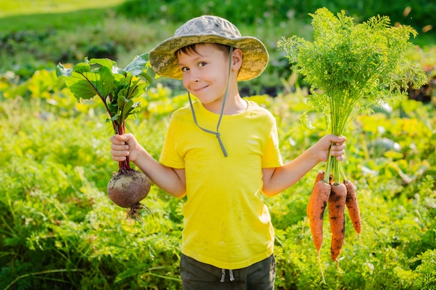 Cute little boy holding a bunch of fresh organic carrots and beets in domestic garden