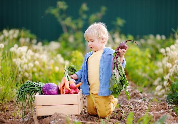 Cute little boy holding fresh organic beet in domestic garden
