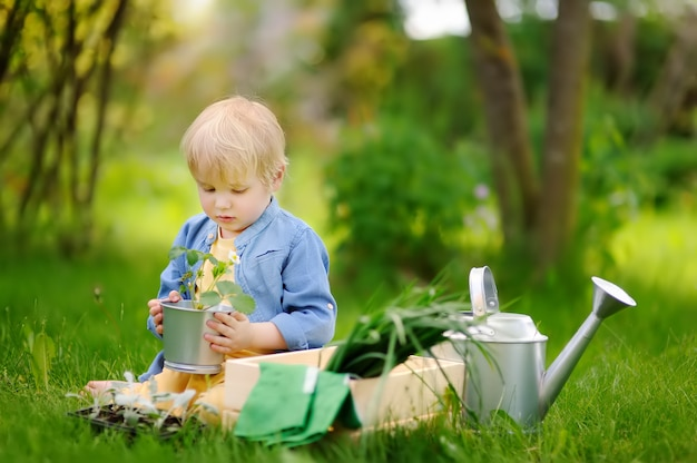 Cute little boy holding seedling in iron pot on the domestic garden at summer day