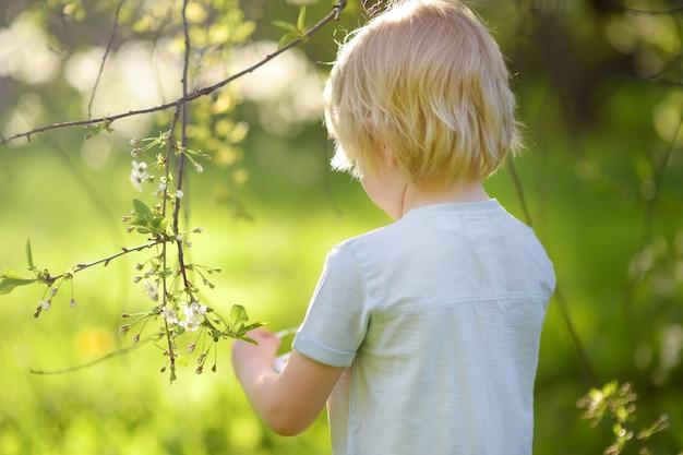 Cute little boy hunts for easter egg on branch flowering tree.