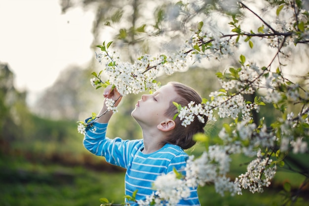 Cute little boy is sniffing blooming flowers in a spring park