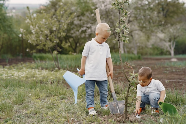 Cute little boys planting a tree on a park