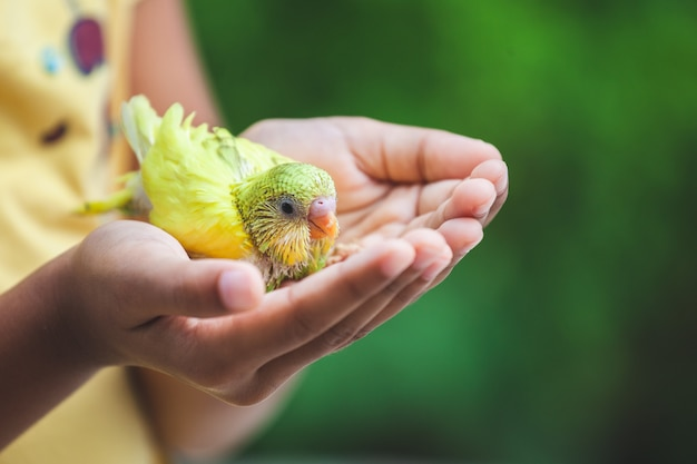 Cute little budgie bird on child hand. asian child girl play with her pet bird with gentle