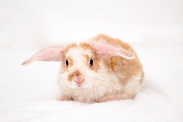 Cute little bunny with big ears