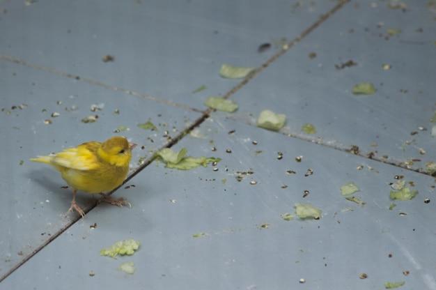 Cute little canary