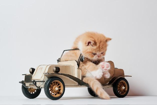 Милый маленький кот играет с игрушкой автомобиля