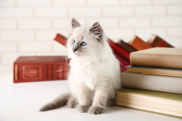 Cute little cat with books