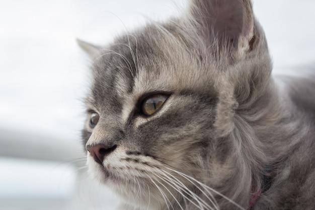 かわいい小さな猫
