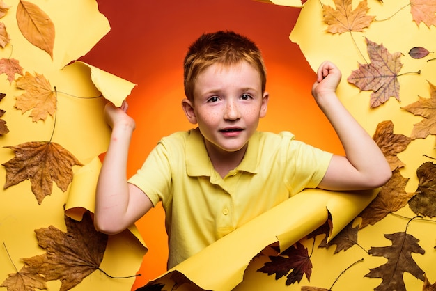 Cute little child boy holding gold leaf on pinc background. little child enjoy childhood. redhead