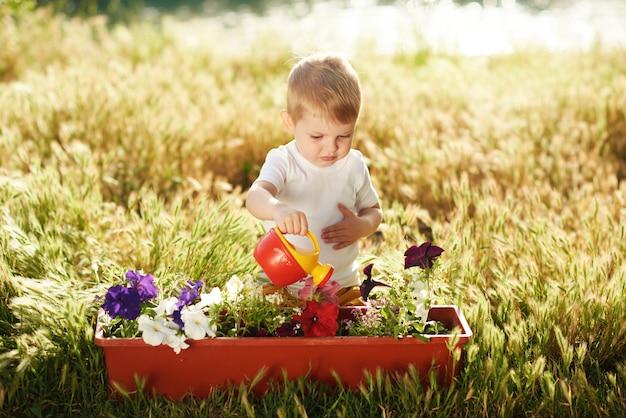 夕日の庭の鍋に花の苗に水をまくかわいい子男の子。楽しい小さな庭師。春のコンセプト、自然とケア。