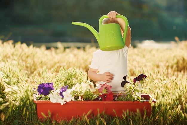 Саженцы цветка милого мальчика маленького ребенка моча в баке в саде на заходе солнца. веселый маленький садовник. весенняя концепция, природа и забота.
