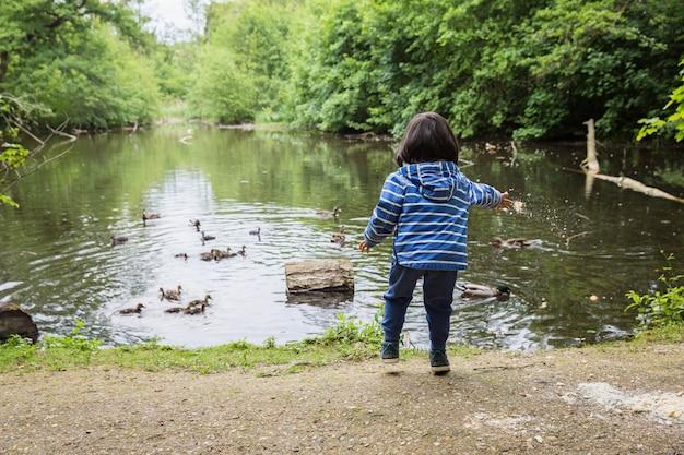 自然公園の池でアヒルに餌をやるかわいい小さな子供