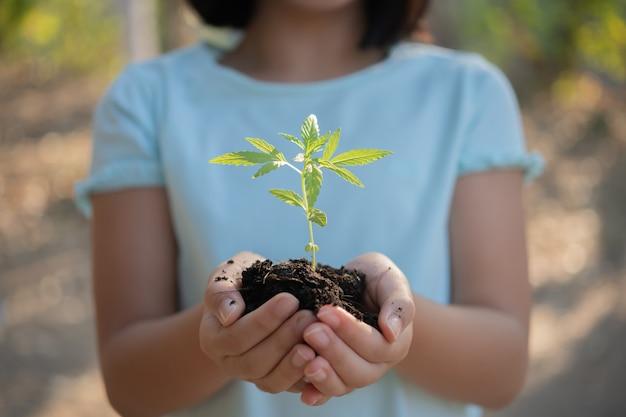 夕日の背景に苗を持つかわいい小さな子の女の子。楽しい小さな庭師。春のコンセプト、自然とケア。マリファナを育て、大麻を植え、手に持っています。