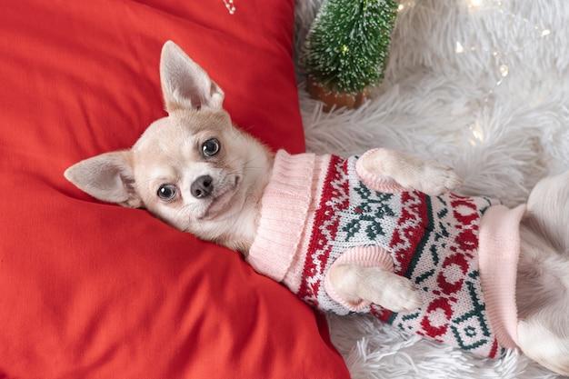 Милый маленький рождественский щенок в свитере лежит на одеяле