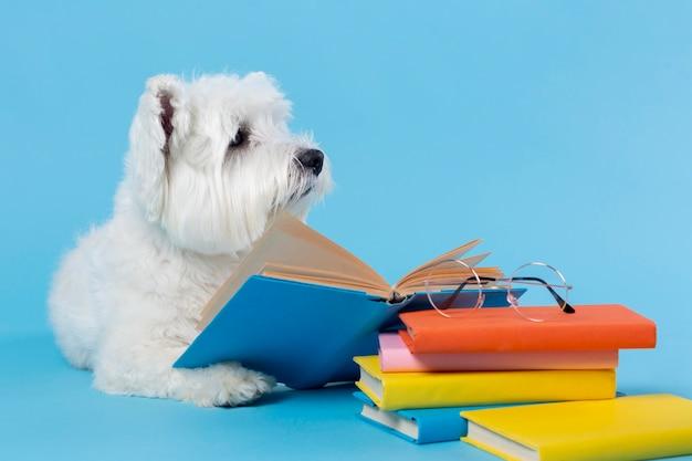 Cute little dog back to school