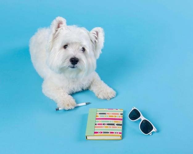 かわいい小さな犬が学校に戻る