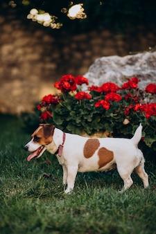 Piccolo cane sveglio nel cortile sul retro