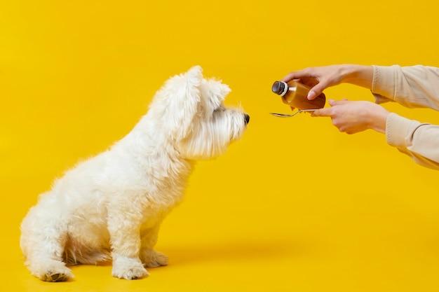 Милая маленькая собака болеет