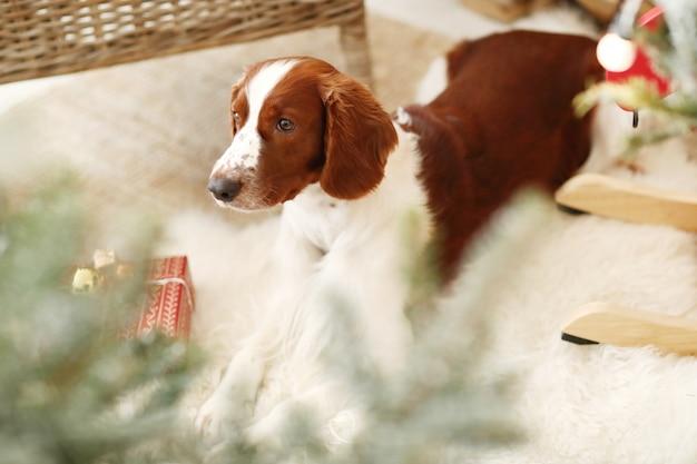 Il piccolo cane sveglio su un natale ha decorato il salone