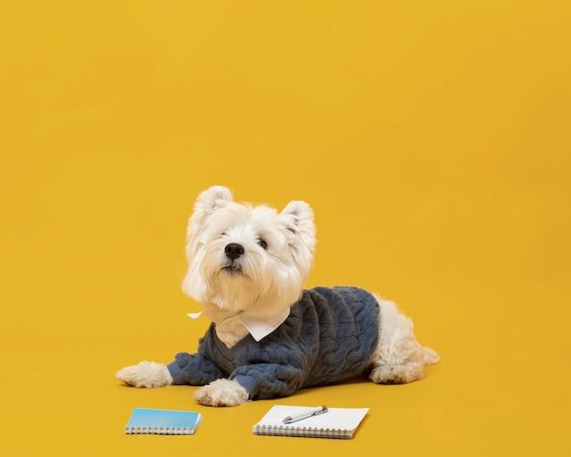 비즈니스 사람을 가장하는 귀여운 강아지