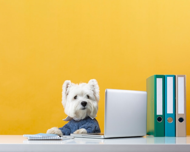 Cute little dog impersonating a business person