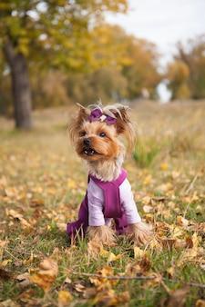 秋の公園を散歩するファッショナブルな服を着たかわいい小さな犬