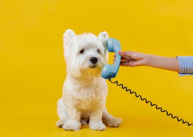 Simpatico cagnolino isolato su giallo