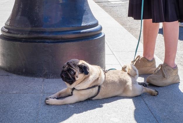 Cute little dog lying on the street