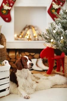 크리스마스 장식 거실에 귀여운 강아지