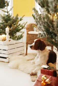 Милая маленькая собака на украшенной рождеством гостиной