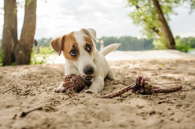 Cute little dog playing with a rope on the lakeside