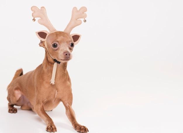 Милая маленькая собака с костюмом