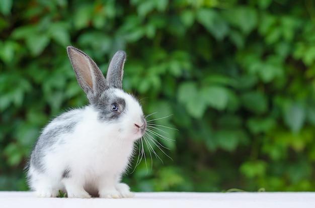 庭の緑の芝生にかわいい小さなふわふわウサギ。バニーはイースターのシンボルです。