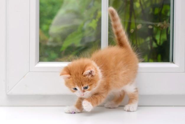 Милый маленький пушистый рыжий котенок с веткой сирени