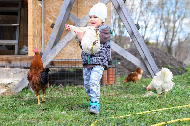 Cute little four year old kid boy holding in hands a white chicken in nature outdoor on the background of a chicken coop