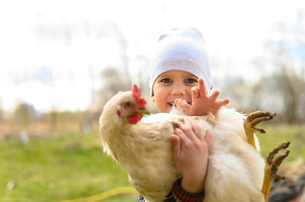 Cute little four year old kid boy holding in hands a white chicken in nature outdoor