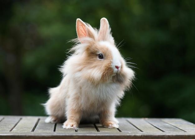 Милый маленький забавный красный кролик с львиной головой в саду.