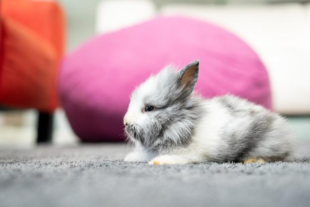 Cute little furry rabbit bunny