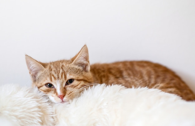 Cute little ginger cat laying in soft white blanket at home