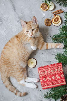 Cute little ginger kitten laying in soft white faux fur blanket holding red paper gift box christmas new year  vintage