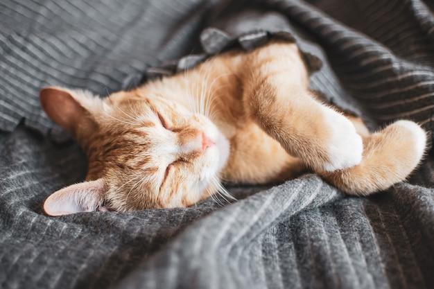 Cute little ginger kitten sleeping in gray blanket
