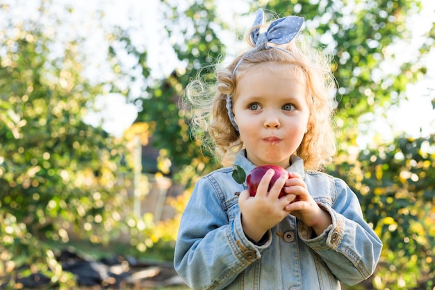 秋のリンゴ園で熟した有機赤いリンゴを食べるかわいい女の子の子供。