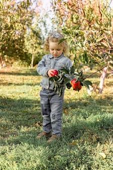 秋のリンゴ園で熟した有機赤いリンゴを選ぶかわいい女の子の子供。健康的な栄養。収穫コンセプト、りんご狩り。
