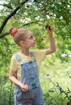 귀여운 소녀가 체리 정원에 있는 나무에서 체리를 따다