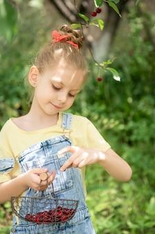 Милая маленькая девочка собирает вишню с дерева в вишневом саду
