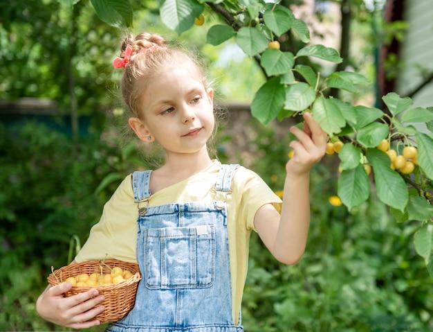 Милая маленькая девочка собирает черешню с дерева в вишневом саду