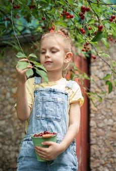 Cute little girl picks a cherry from a tree in cherry garden