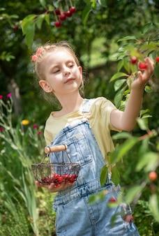 Cute little girl picks a cherry from a tree in cherry garden Premium Photo
