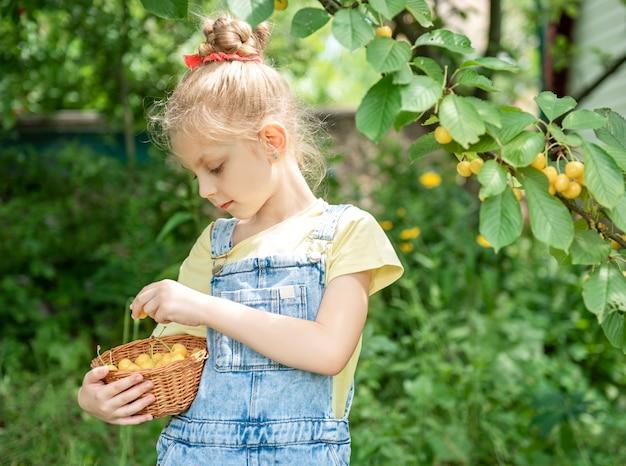 Cute little girl picks a sweet cherry from a tree in cherry garden