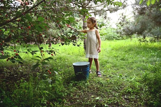 여름 저녁에 정원에서 체리 따기 리넨 드레스에 땋은 머리를 가진 귀여운 소녀
